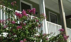 Hidden Oak Apartments Crape Myrtles Jackson MS